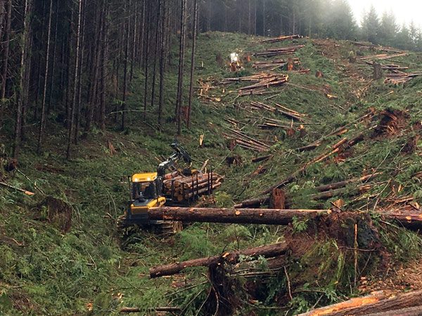 Harvesting | Miller Timber Services