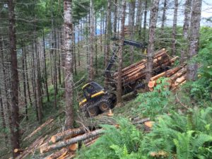 Technology of harvesting timber